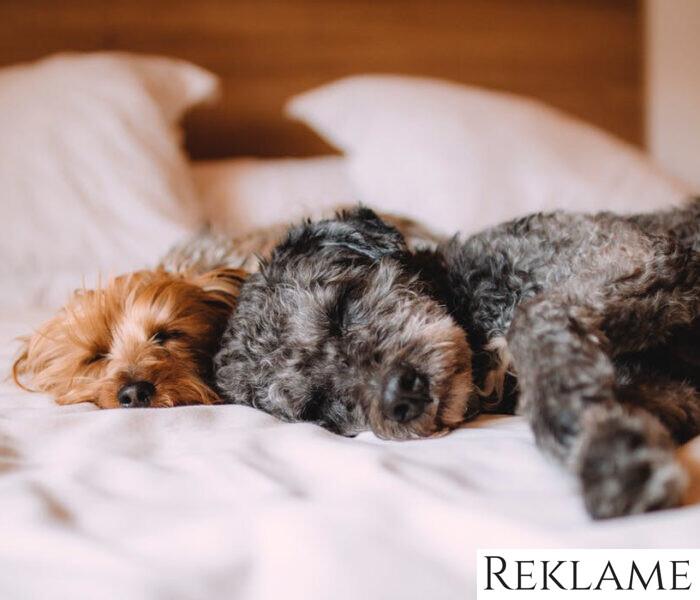 Aktiver og leg med din hund med hundelegetøj i god kvalitet