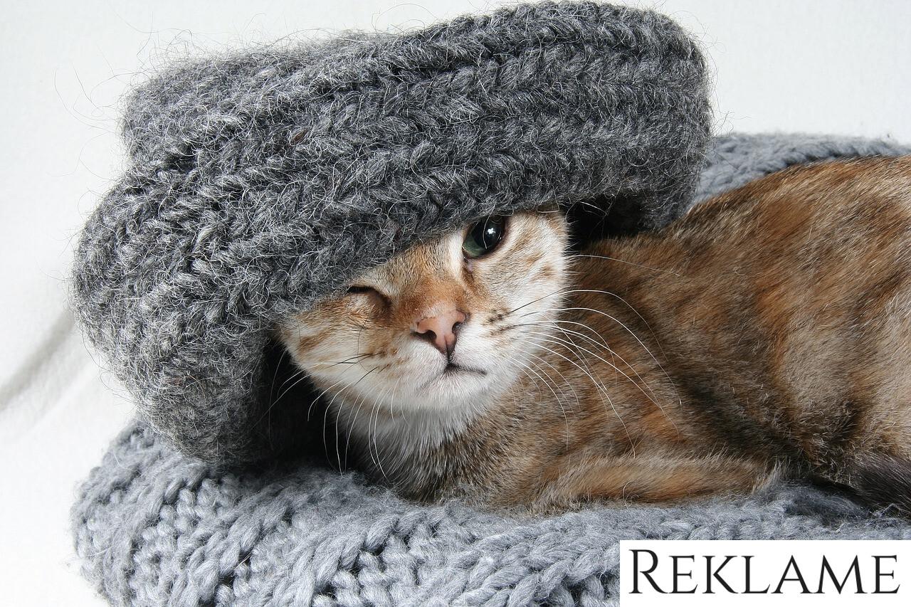 Pas på din kats afføring